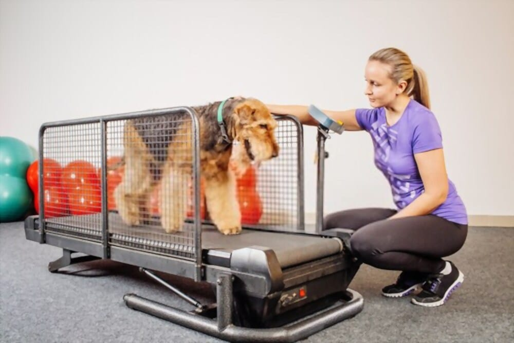 Best Treadmill For German Shepherd